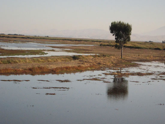 lone tree in a wetland (author photo)