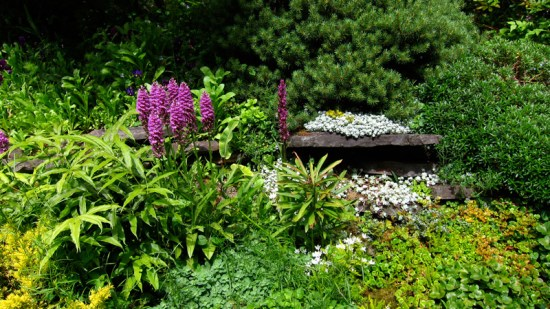 Abundance and variety of ground-covering plants, Dunn Gardens, Seattle (Credit: Susan Barsy)
