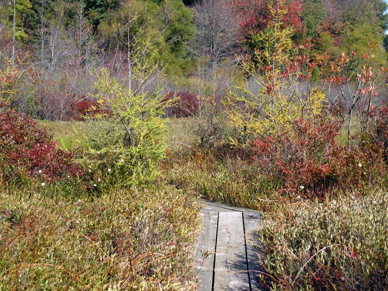 The bog in autumn, © 2012 Susan Barsy