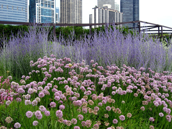 Banks of flowering plants in the Lurie Garden (Credit: Susan Barsy)
