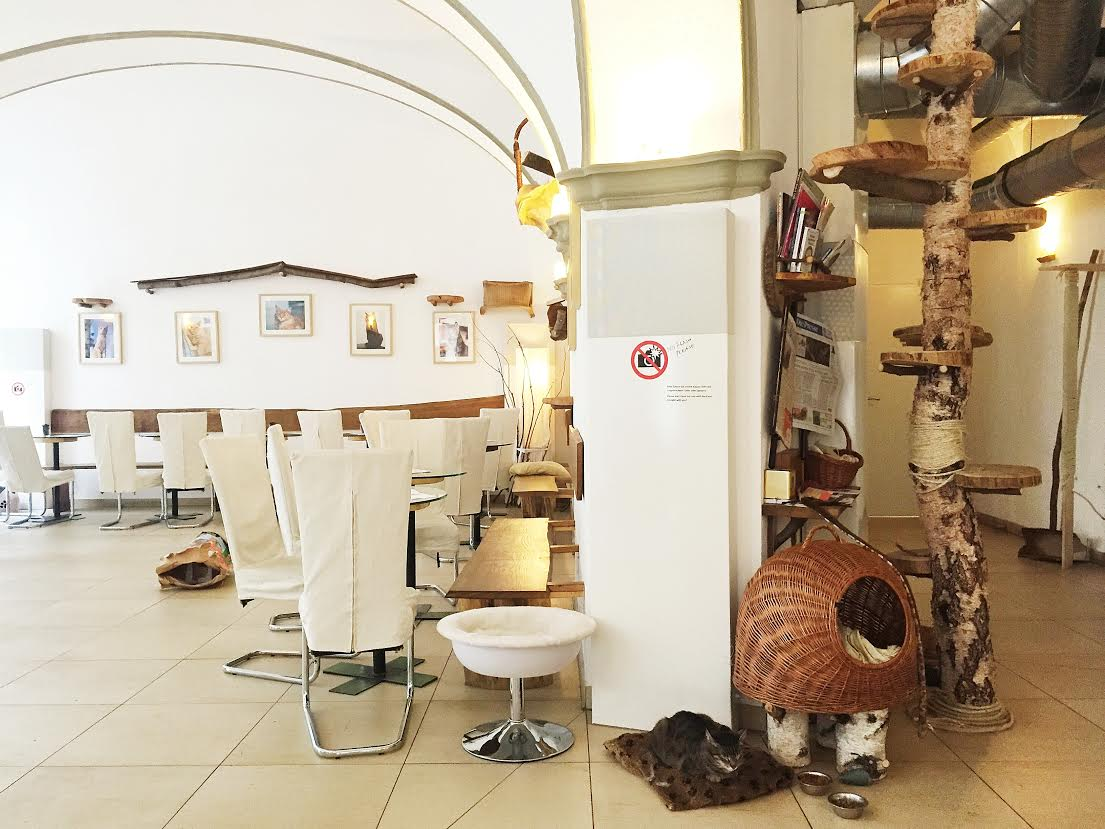 inside the cat cafe vienna