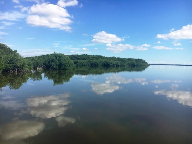 mangroves_keylargo