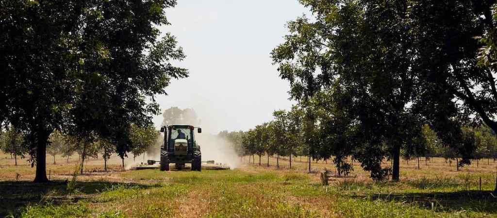 Tractor in American pecan grove