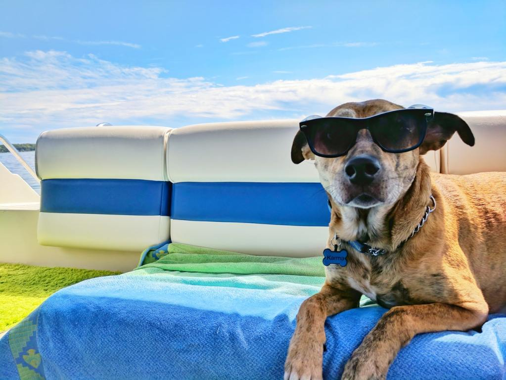 keep pets cool in a heatwave