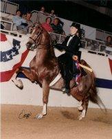 8-saddlebred-roan