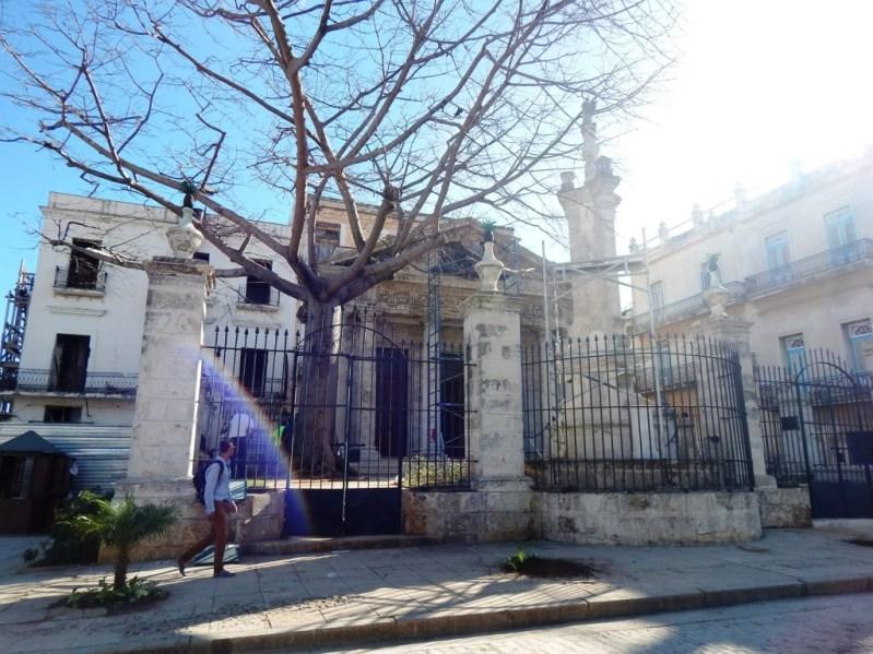 Od Havana, ceiba tree at Temple Templete