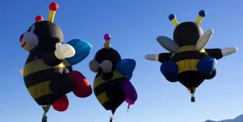 ana-bees-2