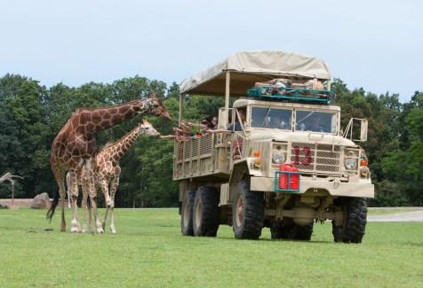 safari_off_road_adventure_2