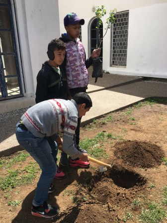 Digging and planting.