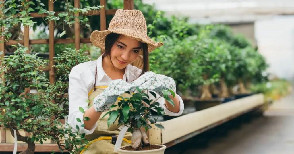 Gardening In India