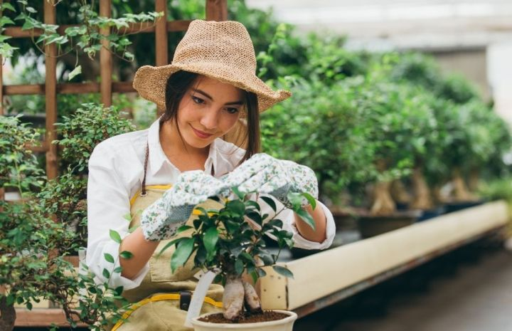 Gardening In India – Useful Tips For Beginners