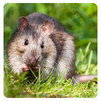 Pest control fort worth texas
