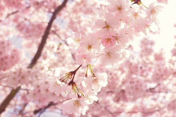 spring weather makes saving money on utilities easy