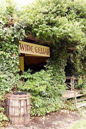 purangi winery in new zealand coromandel