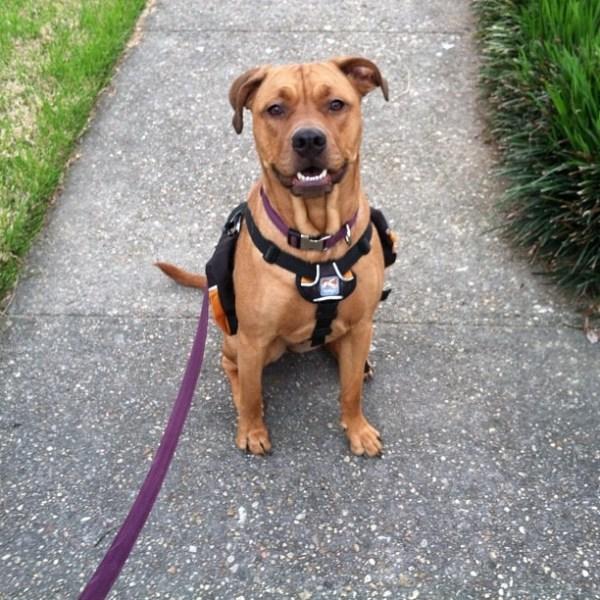 juju the dog  walks are best