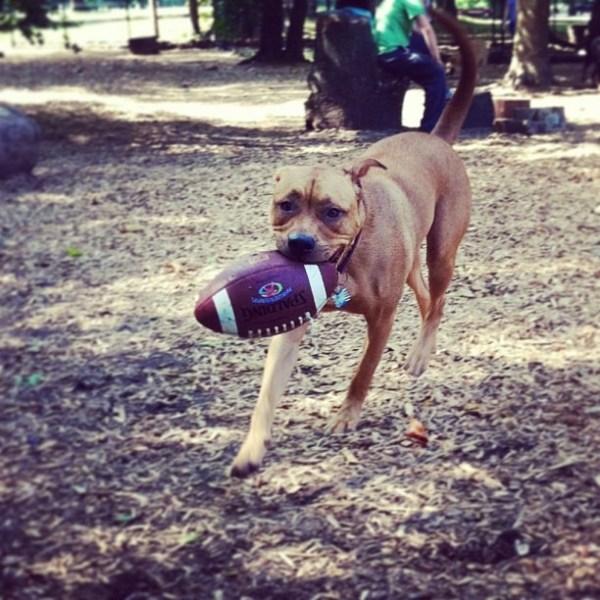 juju the dog with football