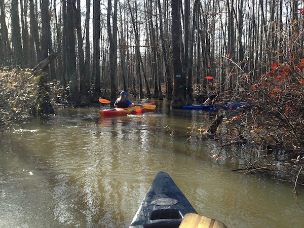 canoe down the wolf river trails in tennessee