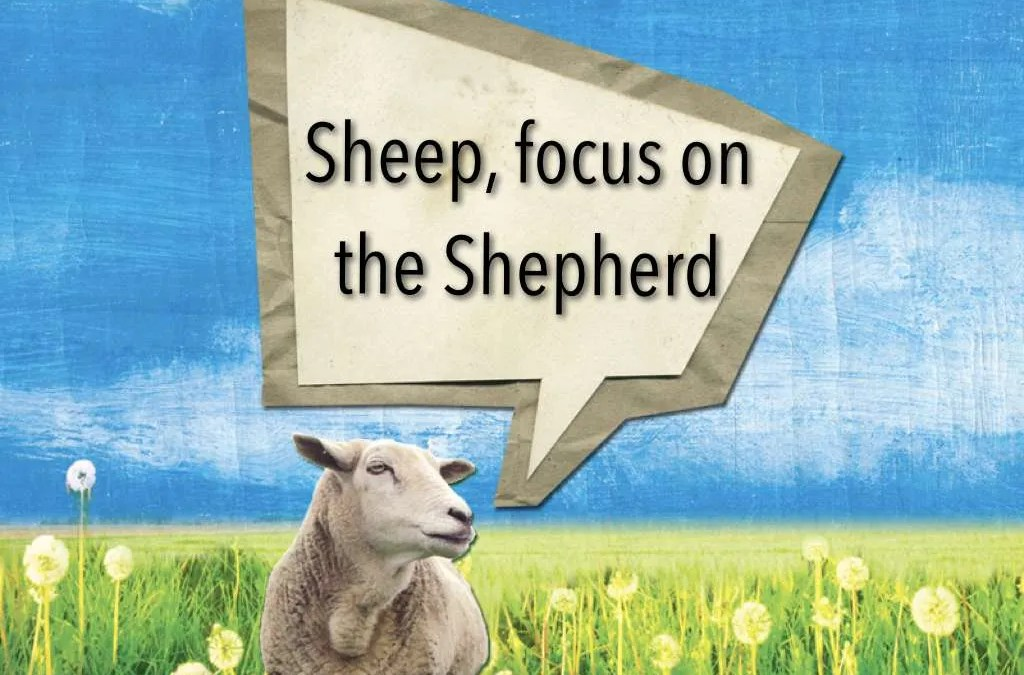 Sheep, focus on the Shepherd
