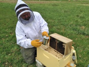Photo of beekeeper attending a hive in protective gear.