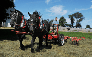 Photo of farmer riding a hayer hitched to draft horses