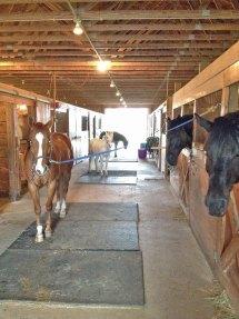 Interior of equine facility