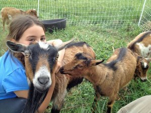 Photo of young girl hugging a goat with other goats around