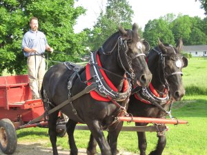 Photo of two draft horses pulling a red wagon