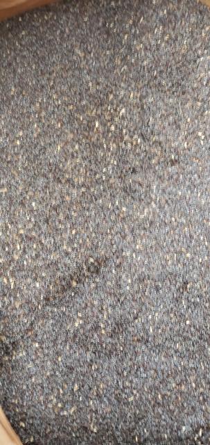 uk popy seeds unwashed green dot lot