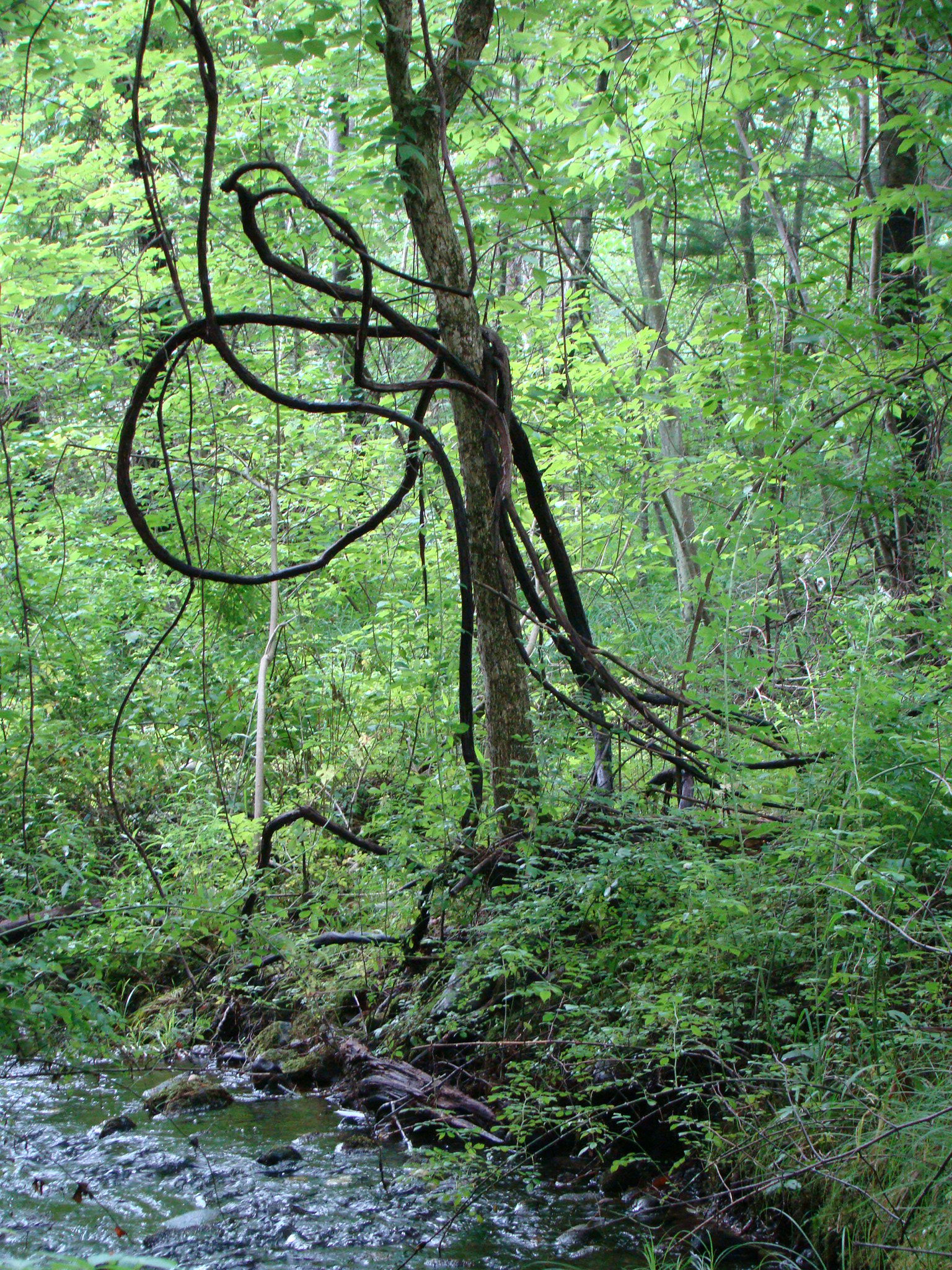 i love the way things grow out in the woods- all windy and NATURAL
