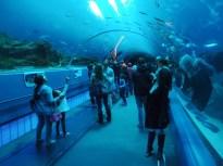 Alagút a víz alatt