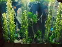 Dél-amerikai akvárium diszkosz- és neonhalakkal