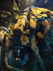 Alul Nóri látható az akvárium mögött... nem kicsi vízoszlopok ezek