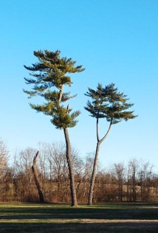 Érdekes fák