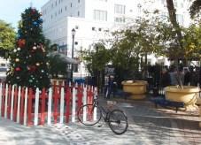 Karácsonyfa, dominó, helyiek