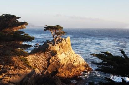 Talán az egyik legszebb motívum ez a magányos ciprusfa