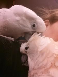amigas4all, bird care, pet care, rescue, animal rescue, bird rescue pet bird