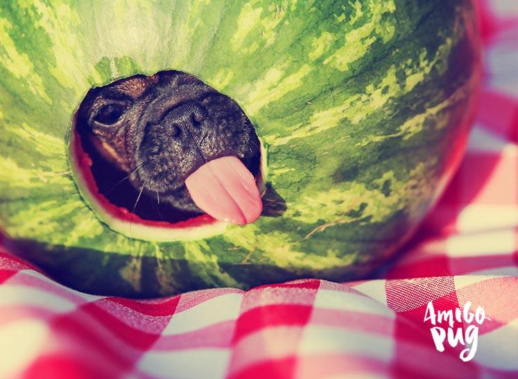 10 frutas permitidas para seu Pug