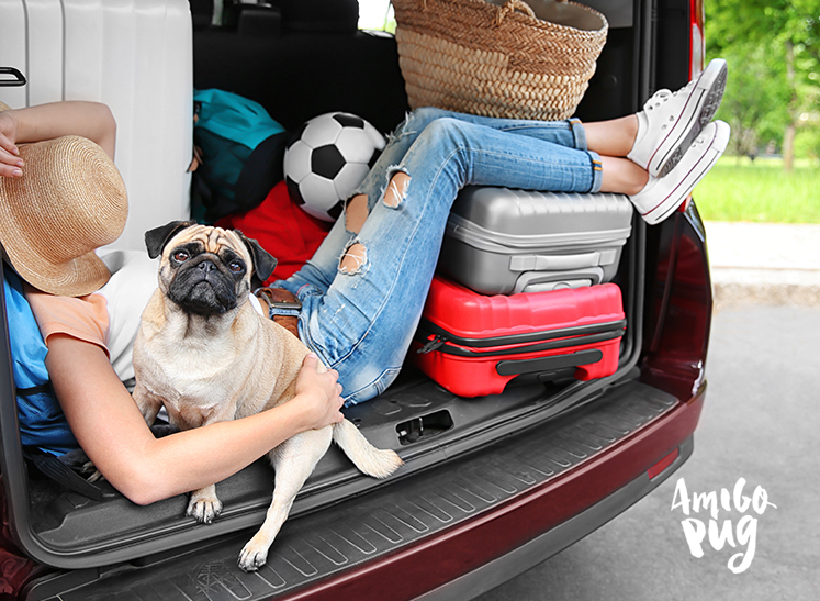 transporte de animais