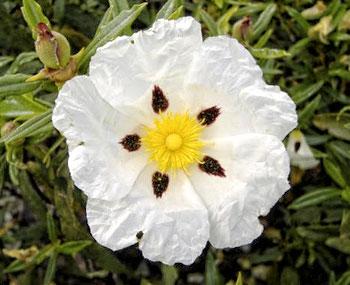 Flor en el Jardín Botánico de Córdoba