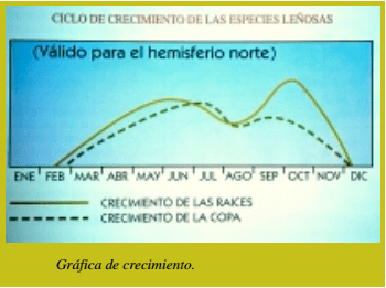Gráfica de crecimiento especies leñosas