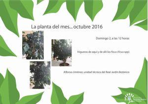 Planta del mes: el Ficus
