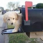 dog-mail