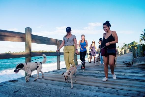 Dog walking on Boardwalk