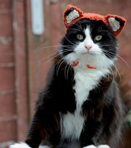 Cat in a fox hat