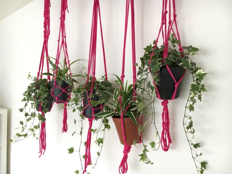 A wall full of modern macrame plant hangers