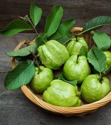 DIY Wednesday: Use Guava Leaves To Get Thick, Long And Healthy Hair