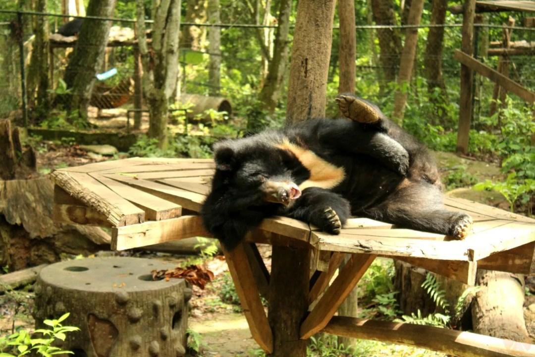 Tired bear