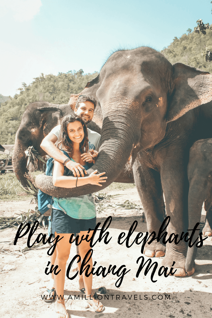 Play with elephants in Chiang Mai