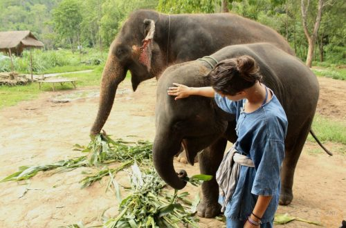 At the elephants camp