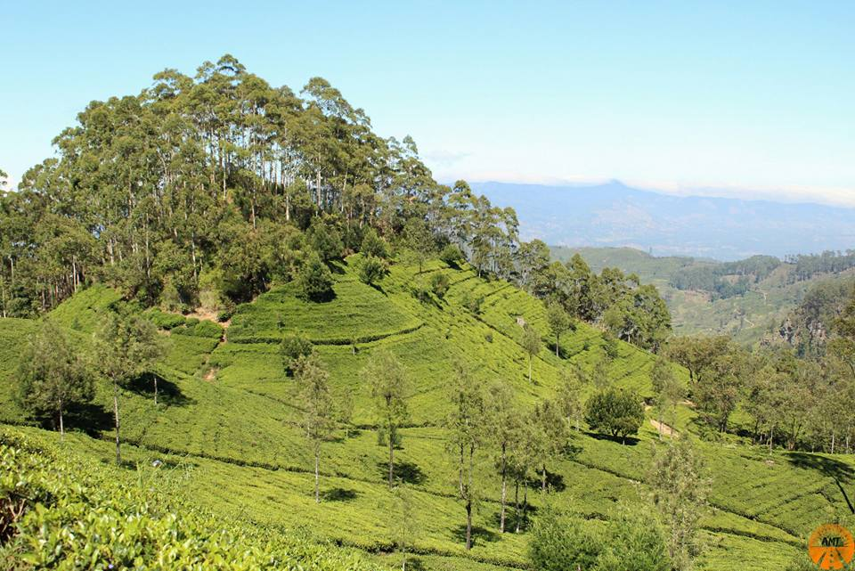 View on the highlands, Sri Lanka